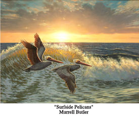 Surfside Pelicans2